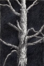"""The Tree"", 2001, Graphite on Paper, 11 x 7 1/4 in., by David Jay Spyker"