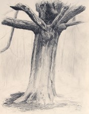 """Blanche's Oak, Study"", 2011, Graphite on Cream Colored Paper, 17 1/2 x 14 in., by David Jay Spyker"