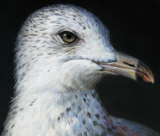 """Baroque Self-Portrait as a Seagull"", 2013, Acrylics on Hardboard, Magnified Detail, by David Jay Spyker"