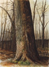 """""""Wyeth Tree"""", 2010, Watercolor and Drybrush on Paper, 12 1/8 x 9 in., by David Jay Spyker"""